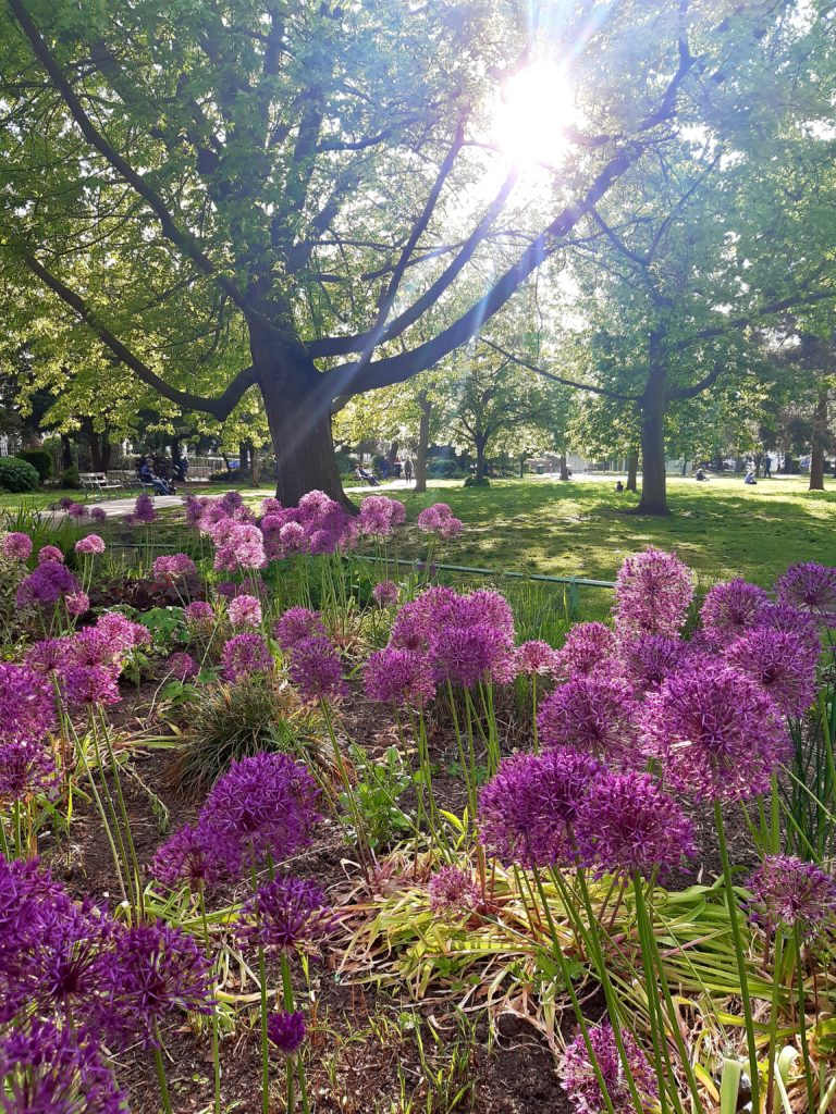 purple flowers and large trees in a sunny park